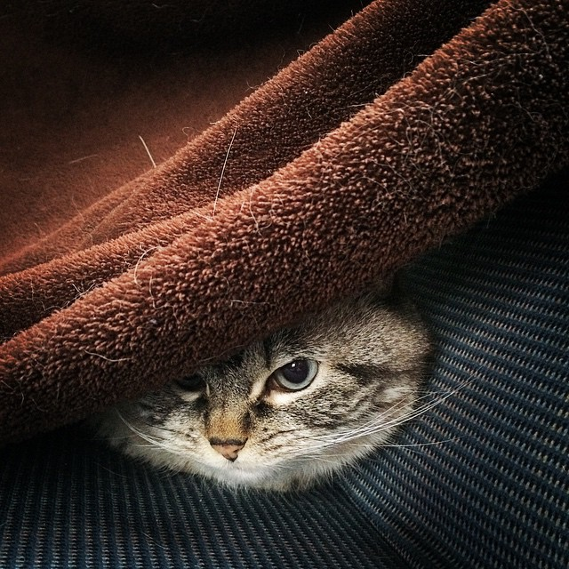 gato-vampiro4