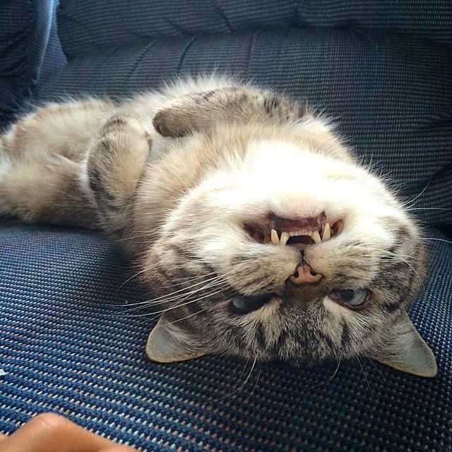 gato-vampiro7