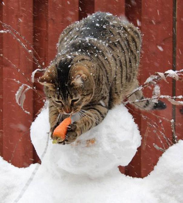 gatos robando comida 10