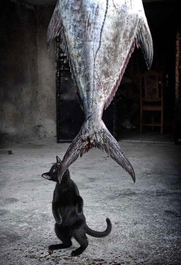 gatos robando comida 11