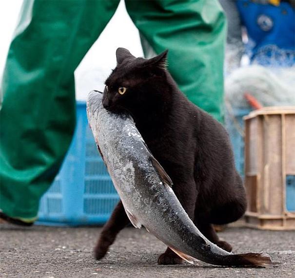 gatos robando comida 14