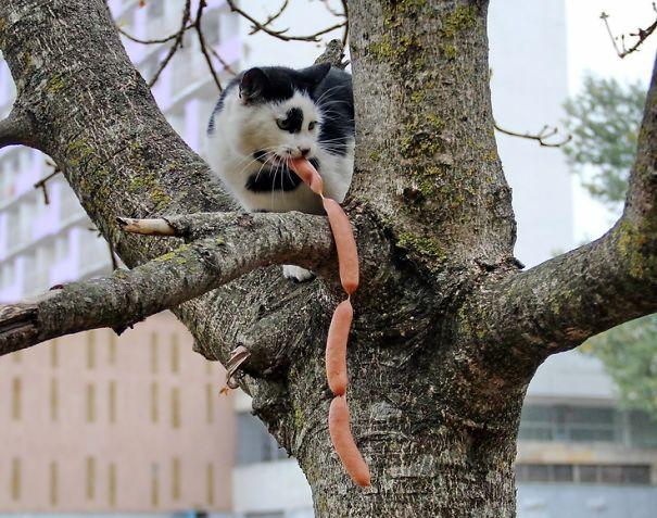 gatos robando comida 15