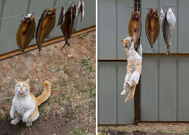 gatos robando comida 5