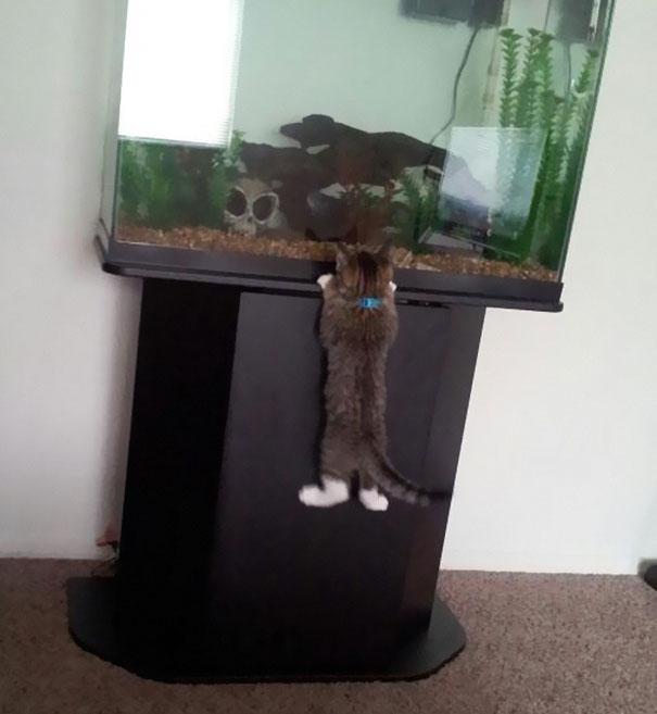 gatos robando comida 8