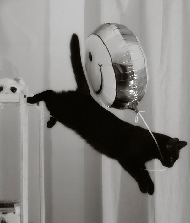 gatos robando comida 9