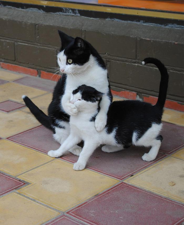 gatos versión miniatura 10