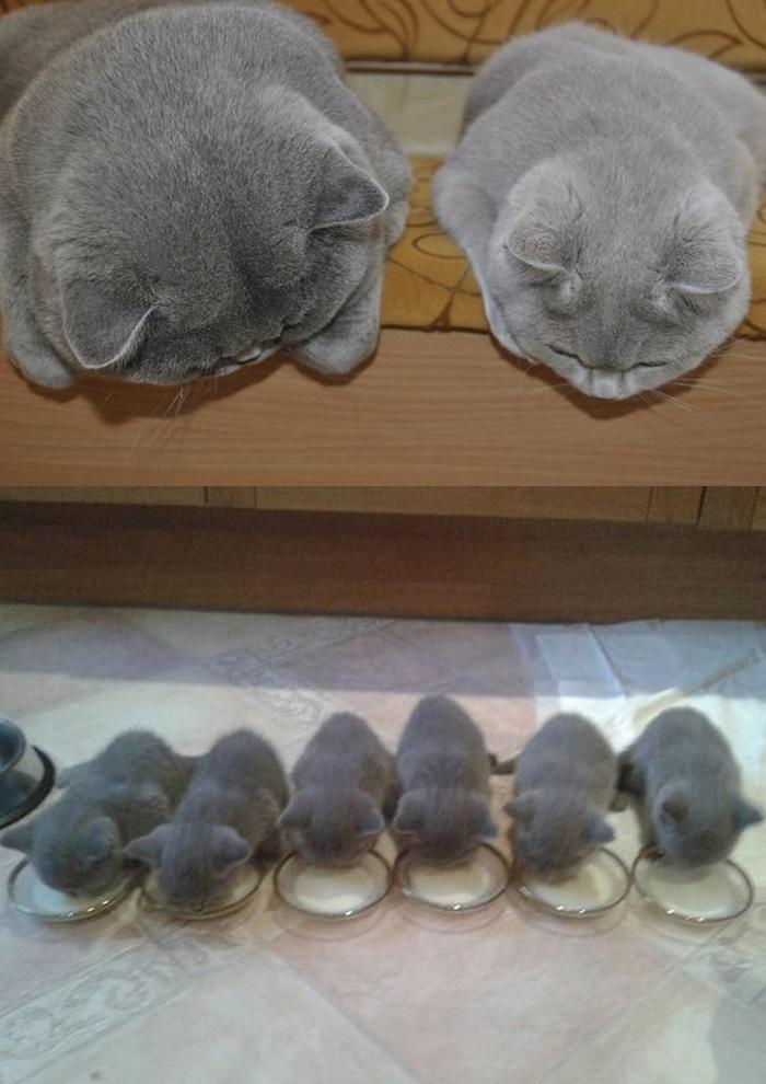 gatos versión miniatura 1