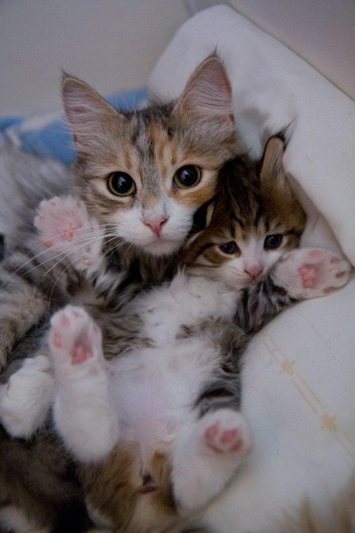 gatos versión miniatura 12