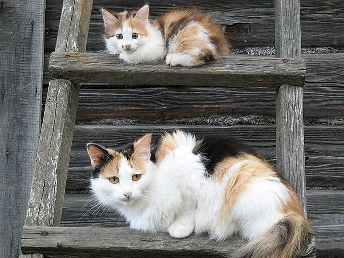 gatos versión miniatura 13