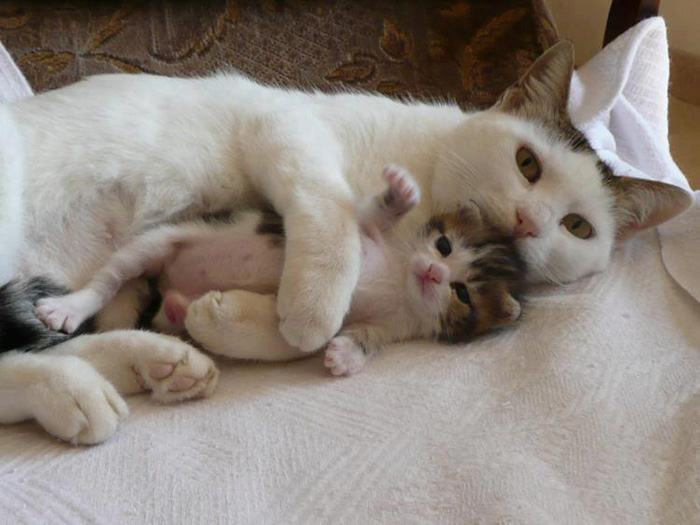 gatos versión miniatura 14