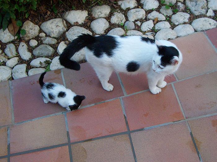 gatos versión miniatura 15