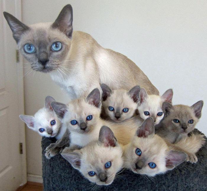 gatos versión miniatura 16