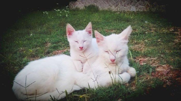 gatos versión miniatura 18