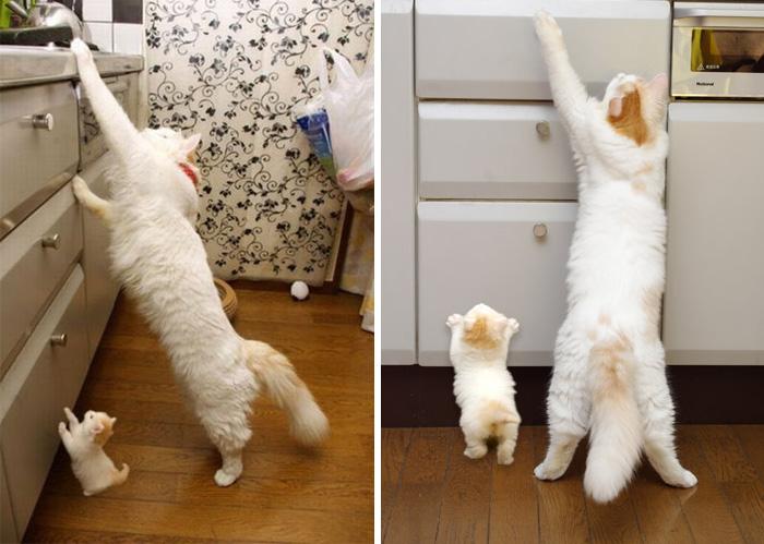 gatos versión miniatura 2
