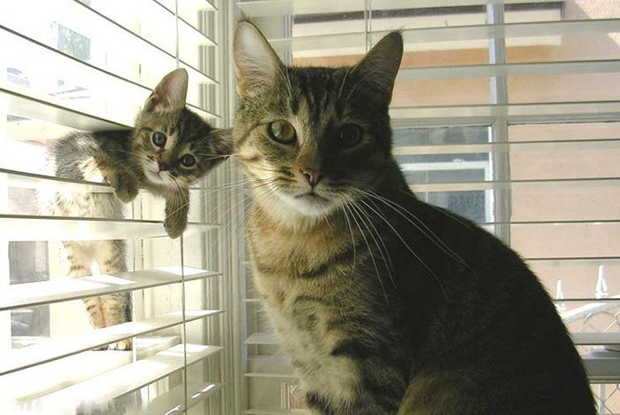 gatos versión miniatura 3