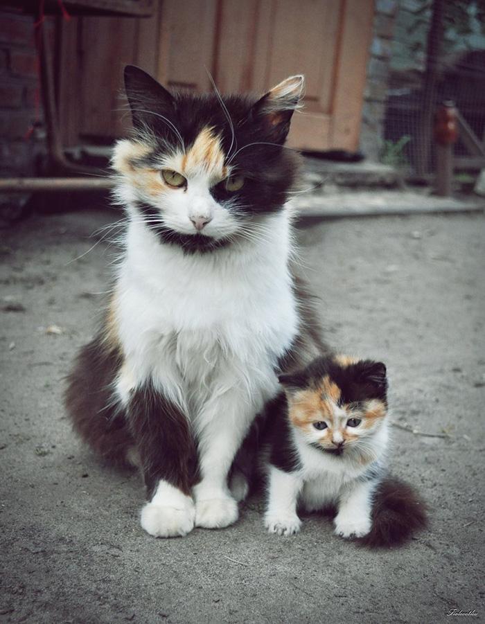gatos versión miniatura 4