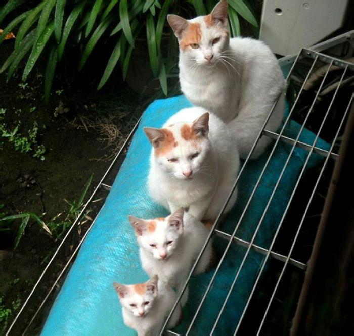 gatos versión miniatura 6