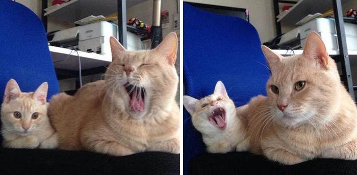 gatos versión miniatura 7