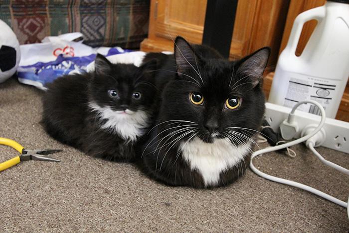gatos versión miniatura 8