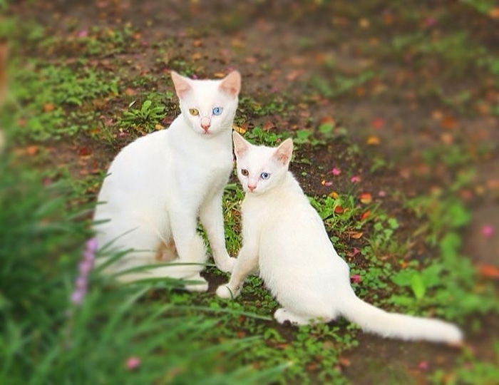gatos versión miniatura 9