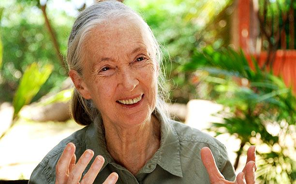 Jane Goodall as seen in JANE'S JOURNEY, a film by Lorenz Knauer. A First Run Features release. Copyright Richard Ladkani, Neos Film, CC Medien.