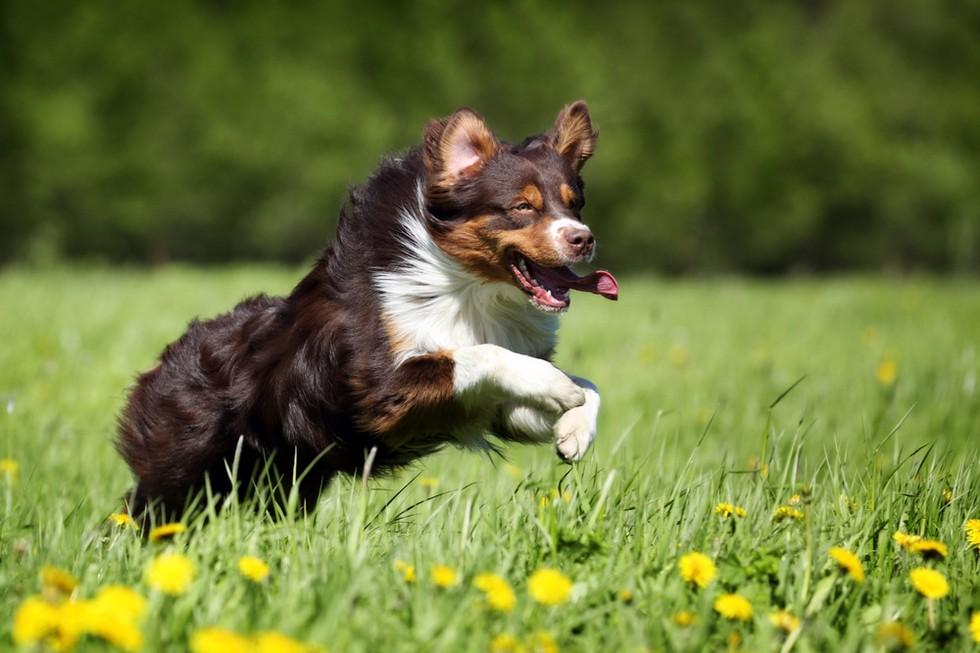 la raza de tu perro habla de ti 12