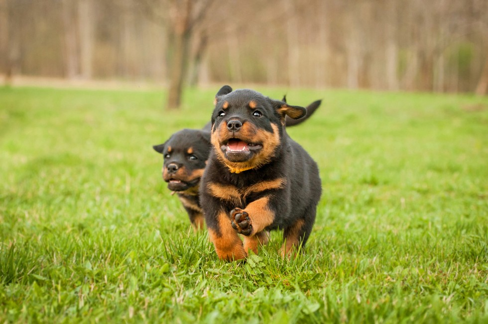 la raza de tu perro habla de ti 13