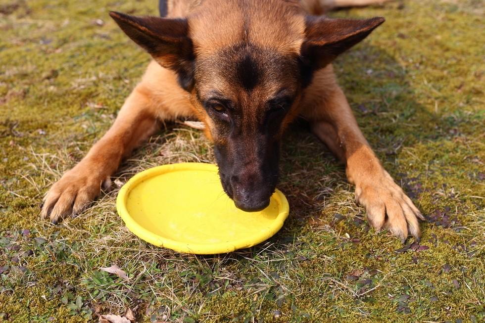 la raza de tu perro habla de ti 5