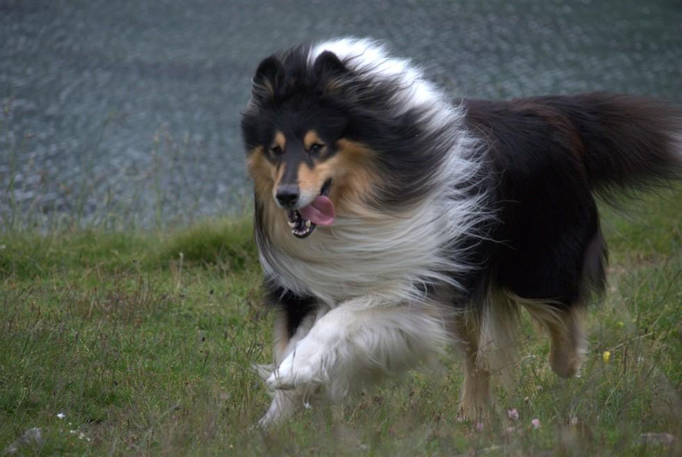 la raza de tu perro habla de ti 6