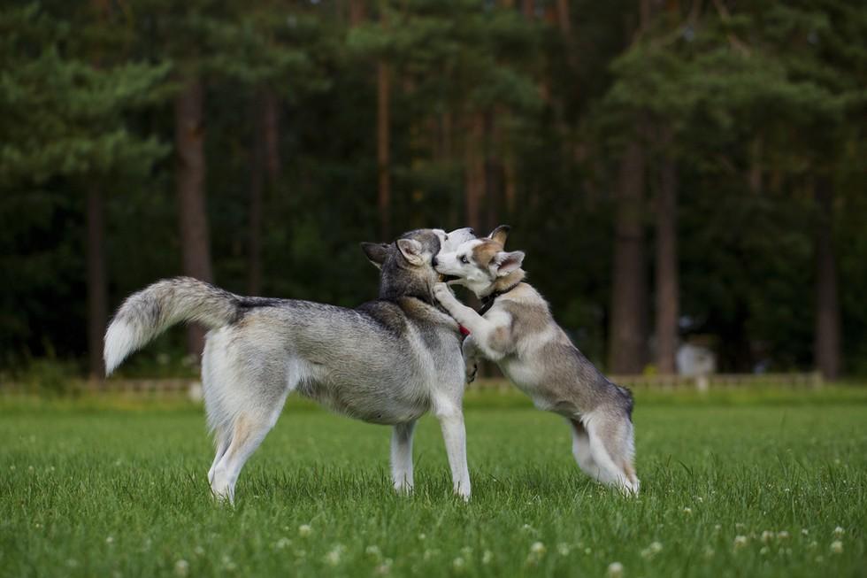 la raza de tu perro habla de ti 9