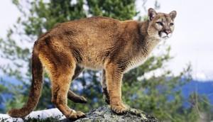 leon-asesinado-montaña - copia