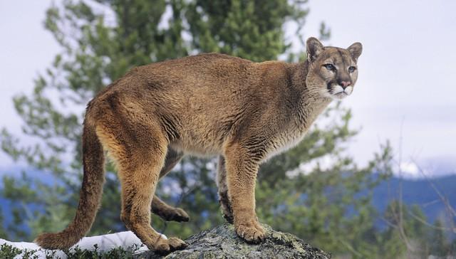 leon-asesinado-montaña