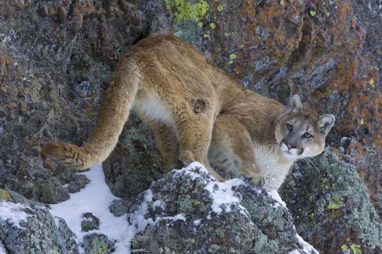 leon-asesinado-montaña2