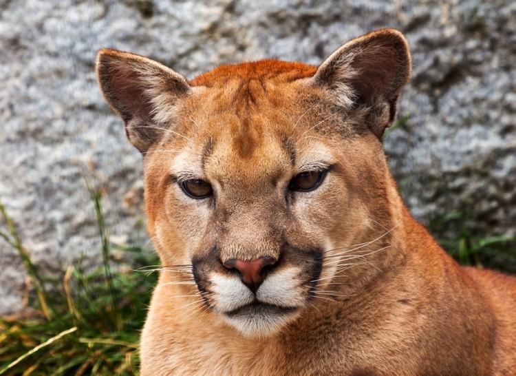 leon-asesinado-montaña5