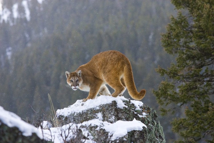 leon-asesinado-montaña6