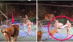 leones-atacan-domadores5