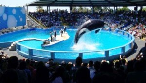 lolita-orca-sea-world - copia