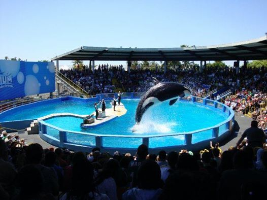 lolita-orca-sea-world