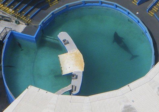 lolita-orca-sea-world3jpg