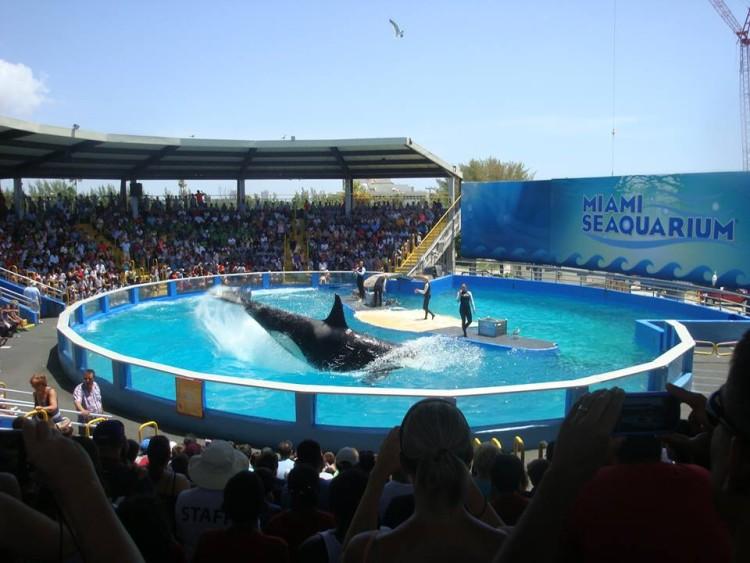 lolita-orca-sea-world4