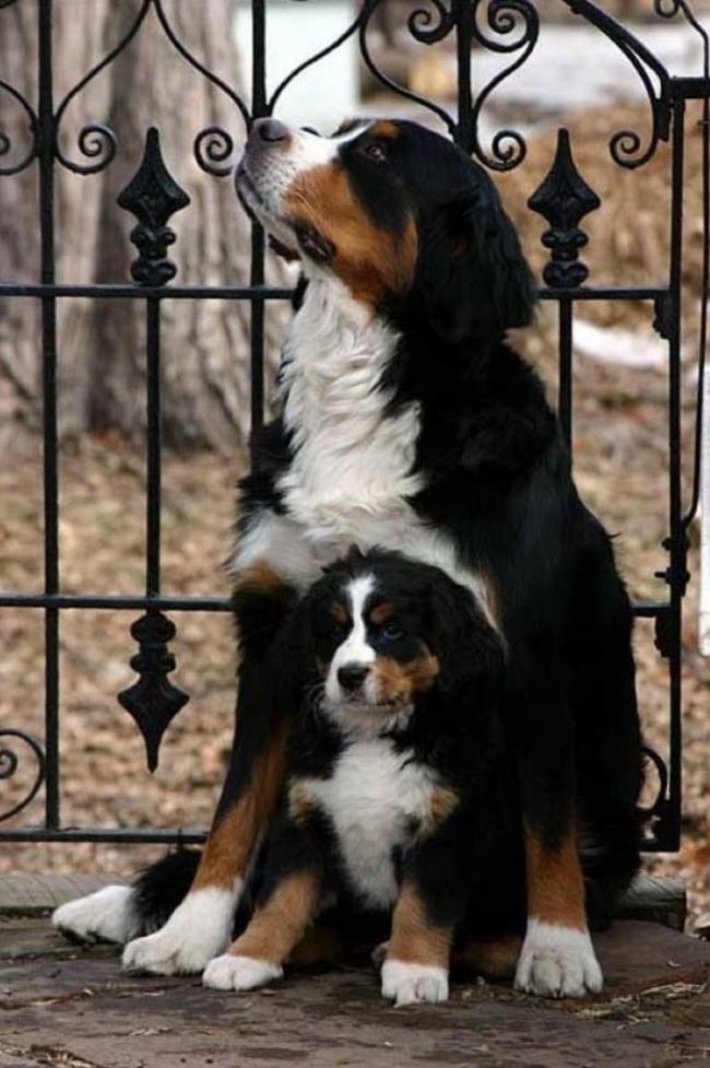 mamas caninas 10