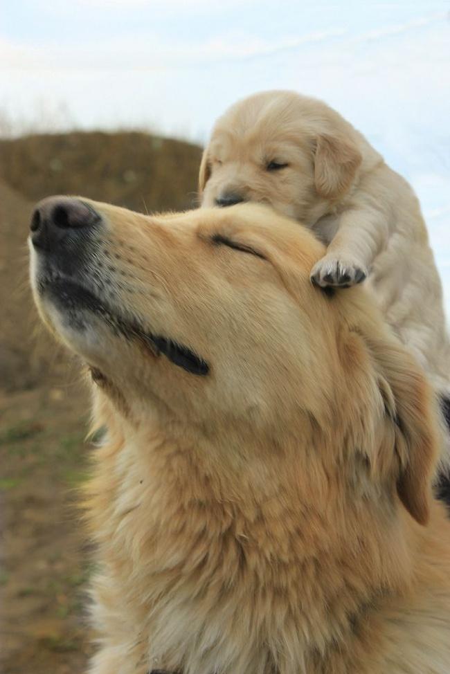 mamas caninas 11