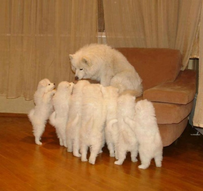 mamas caninas 13