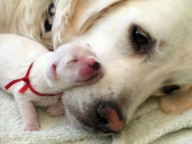 mamas caninas 2