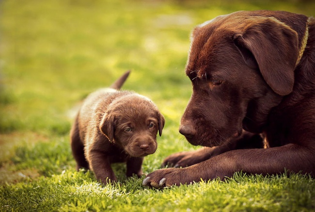 mamas caninas 4