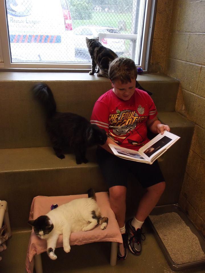 niños leen a gatos del refugio 1