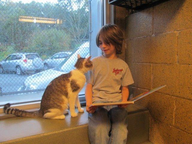 niños leen a gatos del refugio 2