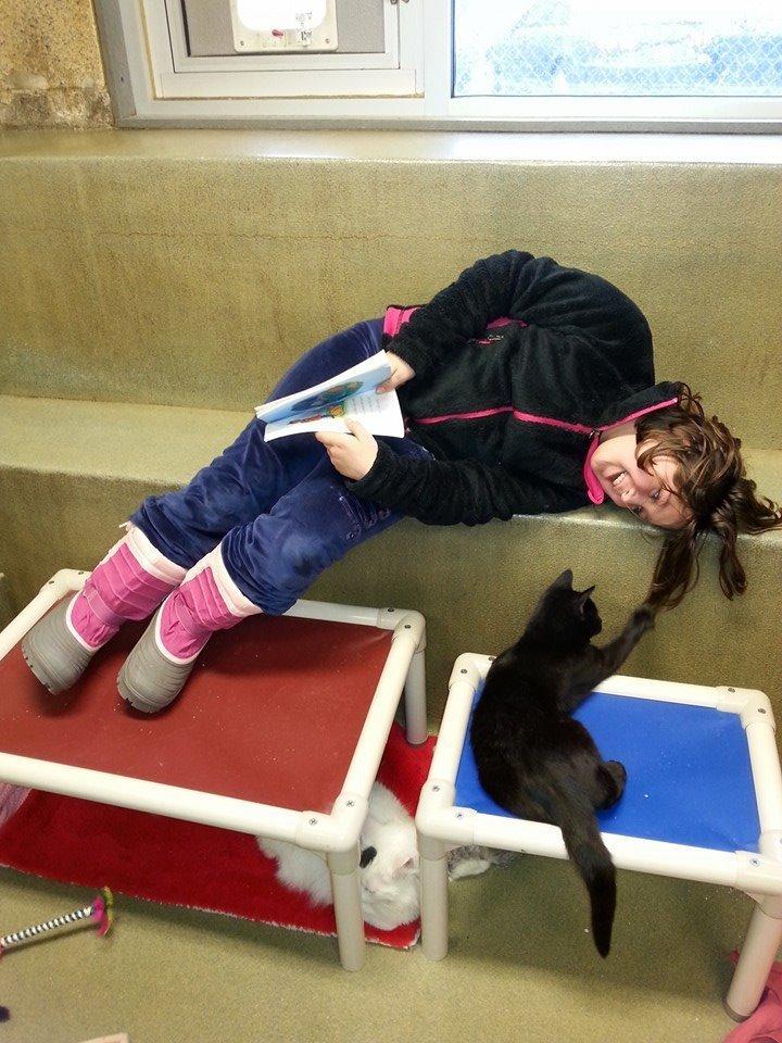 niños leen a gatos del refugio 3