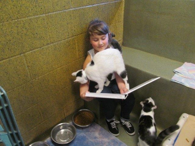niños leen a gatos del refugio 5