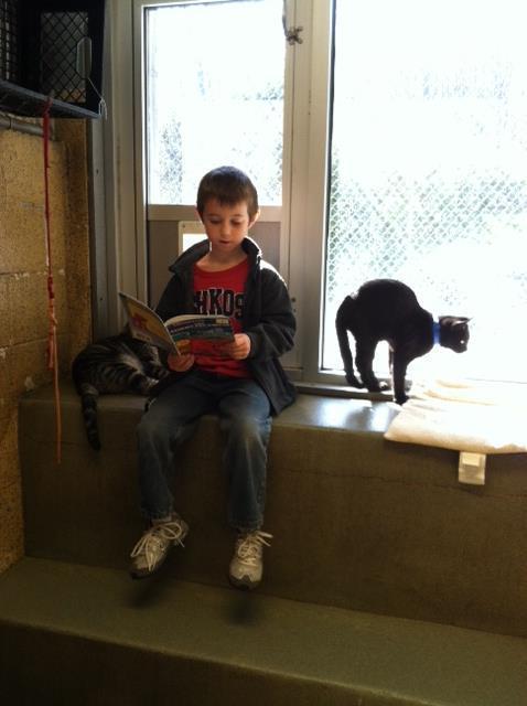 niños leen a gatos del refugio 7